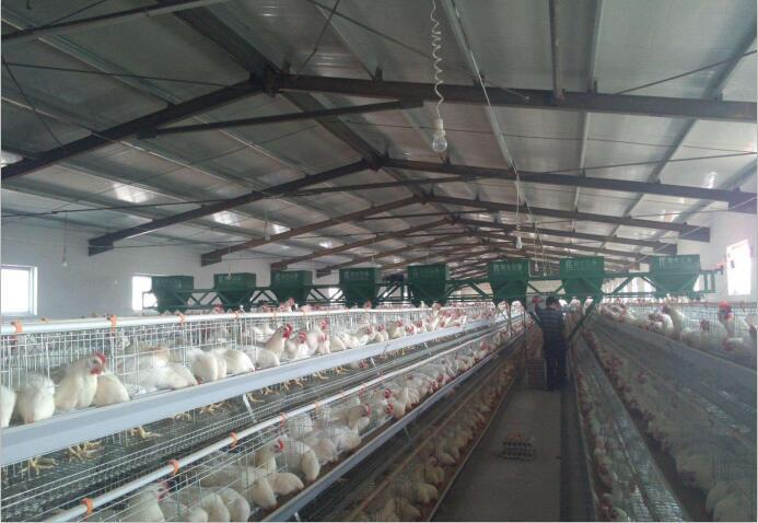 四川牧场设备厂家告诉你全自动喂料体系的优点有哪些