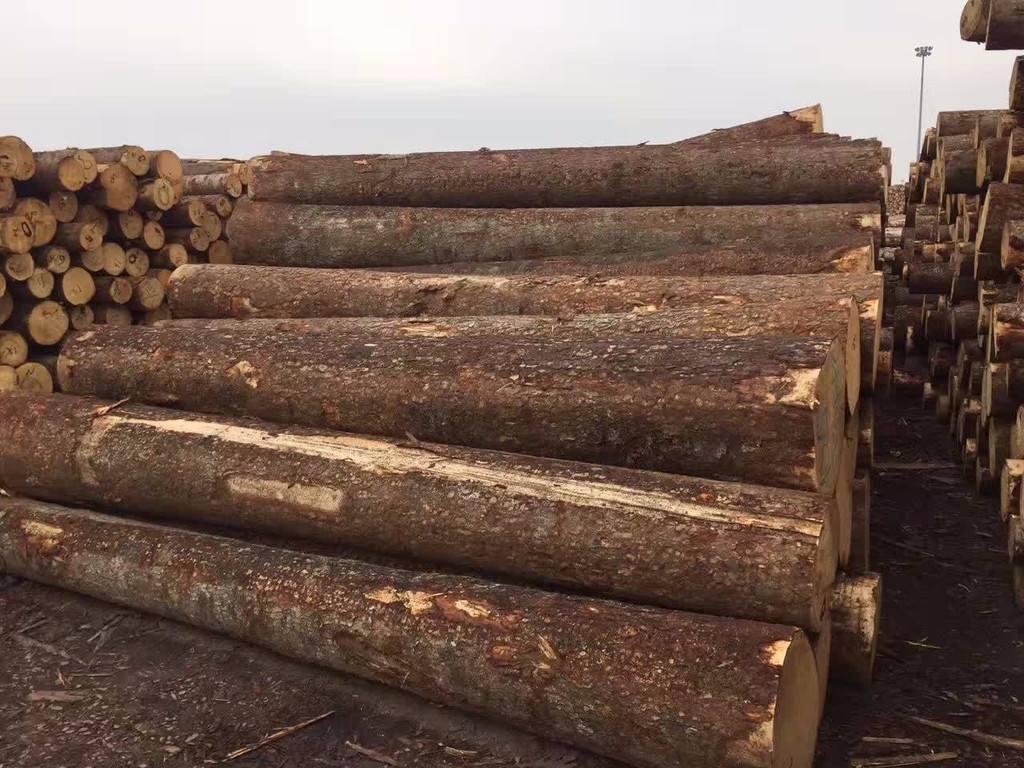 兰州防腐木木材原料