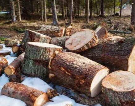 防腐木的极佳存储方法 爱木材的朋友们快来看哦