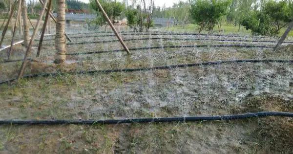 行业技术 | 内蒙古喷灌带在绿化工程中的运用