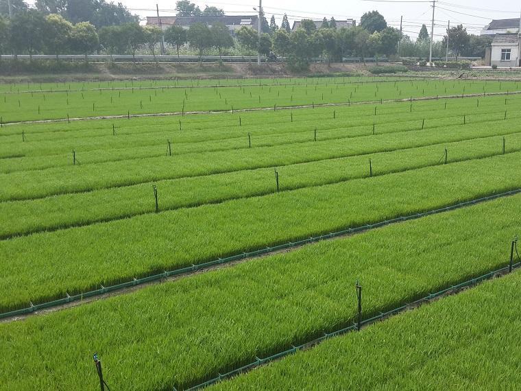 农业节水灌溉有几种灌溉方式