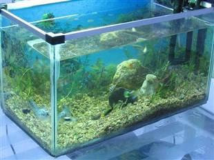 钢化玻璃鱼缸制作