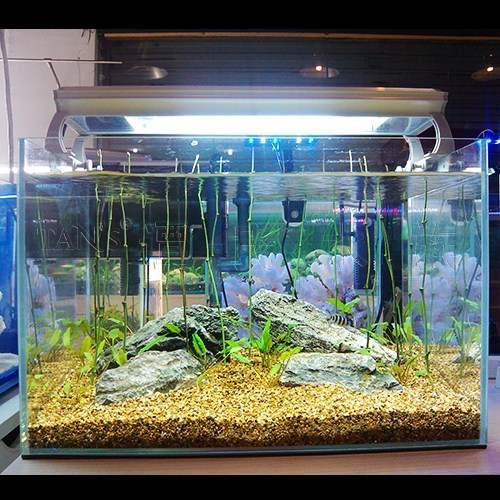 钢化玻璃鱼缸