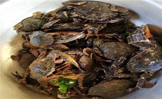 哈仙岛美食——香脆可口,越嚼越香