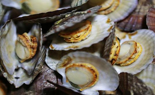 哈仙岛美食——哈仙岛美食攻略