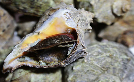 哈仙岛美食——挑逗你的味蕾神经
