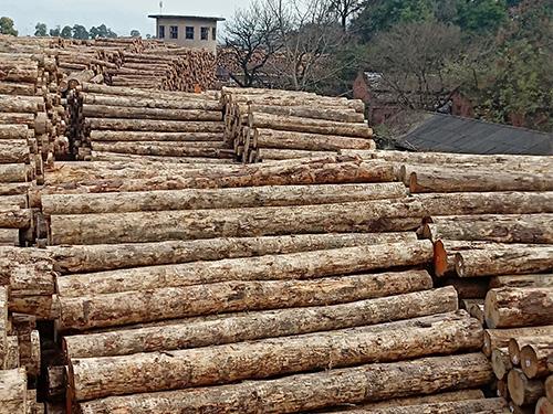宜賓木材市場