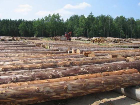 宜宾木材厂家之铁杉木方