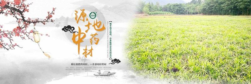 四川麦冬种植厂家