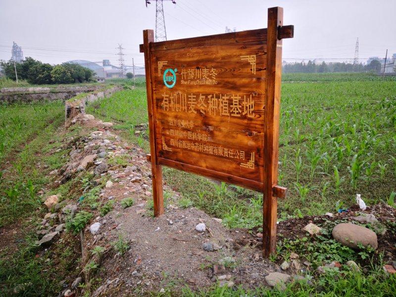 四川麦冬种植基地