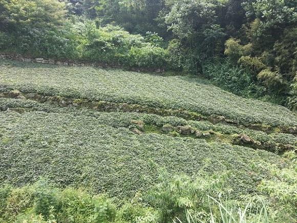 四川省源地中药材种植有限责任公司种植基地
