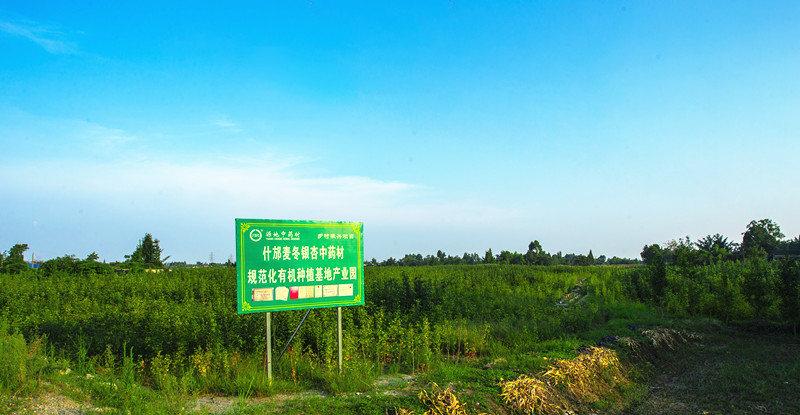 四川有机银杏叶