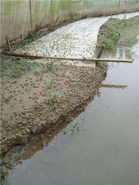 四川青蛙商品蛙养殖基地