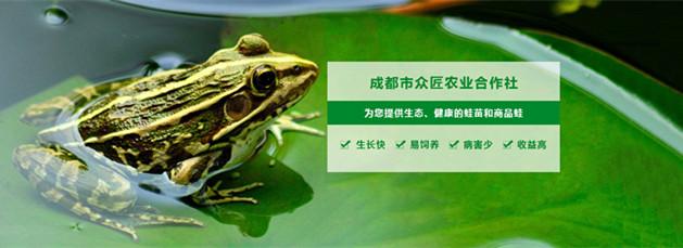 众匠青蛙养殖基地——四川黑斑蛙批发