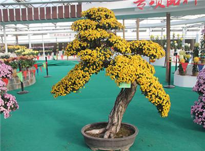 菊花造型制作案例