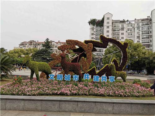 江苏五色草造型合作案例