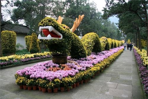 河南菊花造型设计