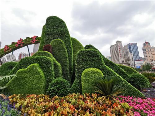 河南菊花造型设计价格