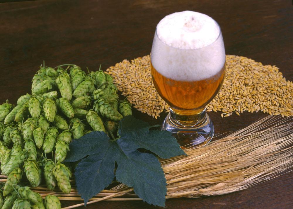 喝啤酒會長胖嗎?啤酒設備廠家告訴你