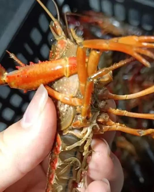 兰州小龙虾加盟