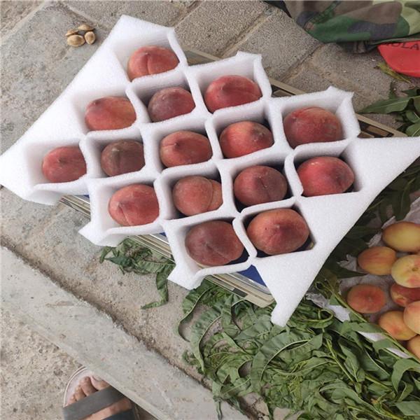 驻马店珍珠棉水果托去哪里买?重品包装告诉你