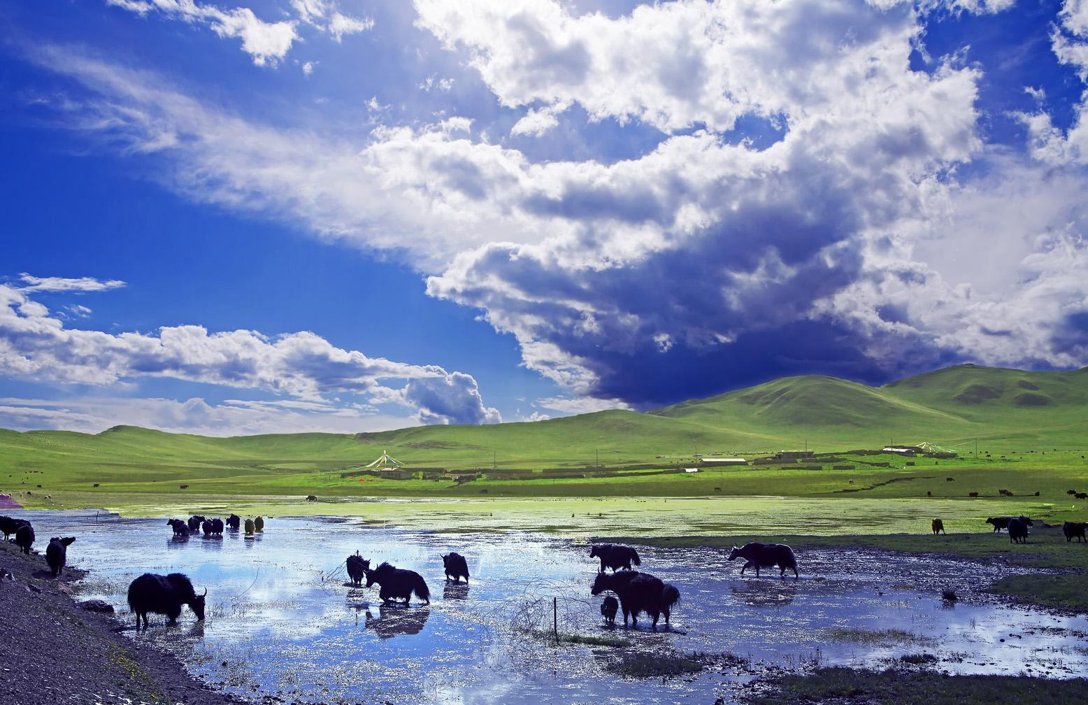 内蒙古日报社团建课堂走进蒙草集团百草园