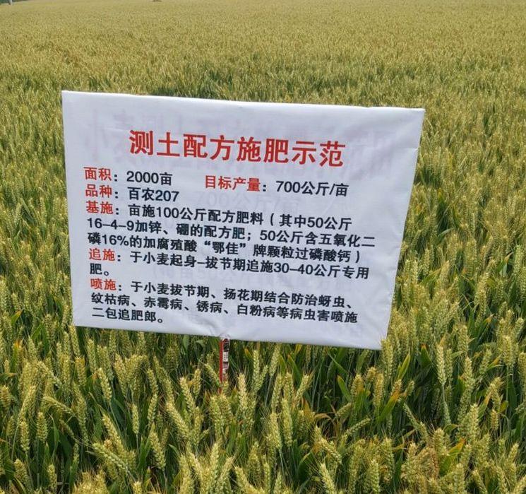 小麦长势实况