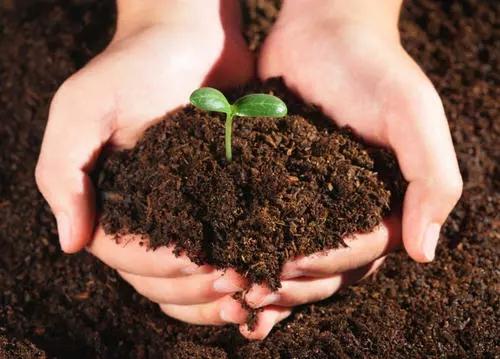 所有的湖北生物有机肥料就是有机肥吗?其实两者之间的区别较大