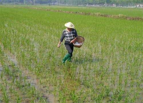 在农作物生长的过程中湖北肥料是否必须施用呢?施肥后就一定能高产呢?