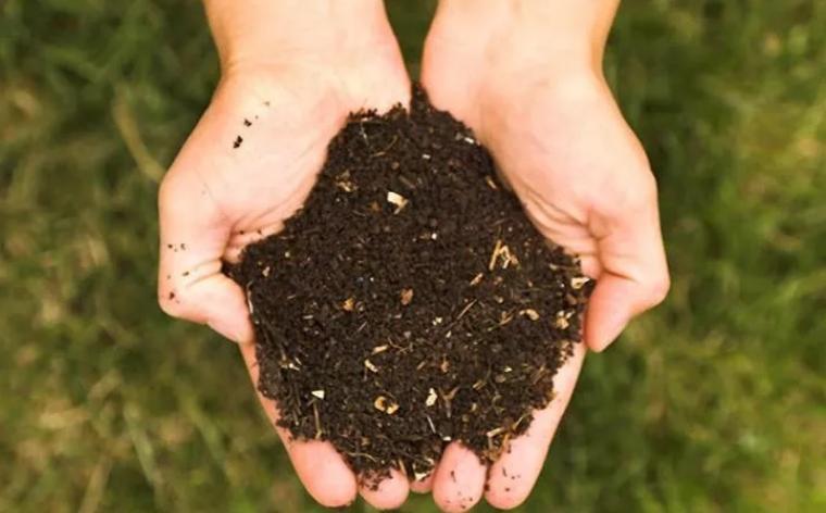 果树同样需要施肥也会有助于其长的更好,那么它可以使用有机肥料吗?