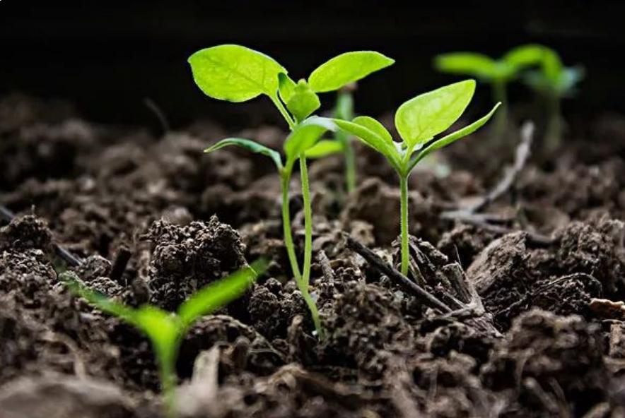 土壤的过度开发与使用,导致其含有营养的物质减少,需要通过有机肥料提升肥力