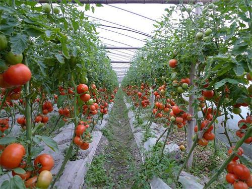 自有机肥上市以来,客户选择成交率还是较高的,这也算是得到人们的一种认可