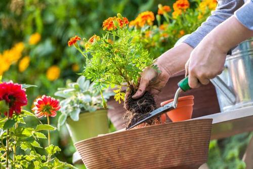 湖北复合肥料不仅适用于农作物,用来养花也是可以的,注意氮磷钾的比例即可