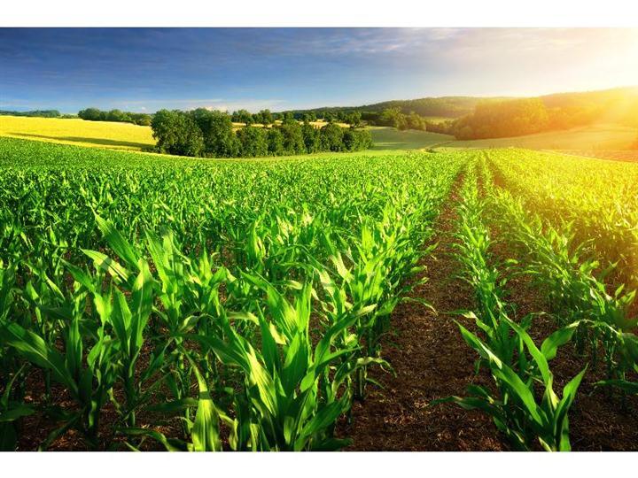 湖北肥料应用