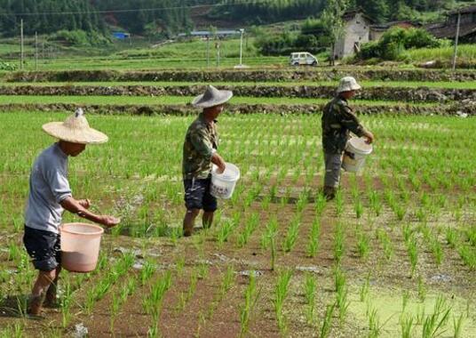 夏季高温天气居多,但同时也是很多农作物生长的高峰期,更要正确的施肥