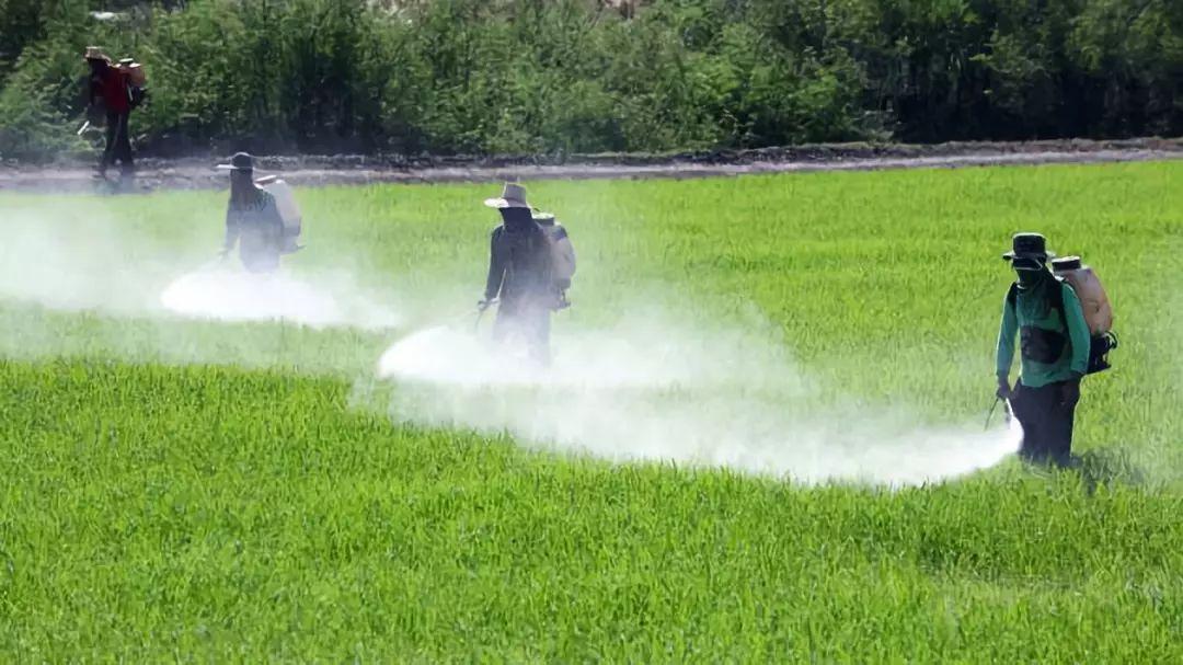 虽然肥料大面积的投入使用,但有些类型的肥料是不适合混着用的