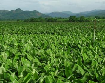 生物有机肥料应用