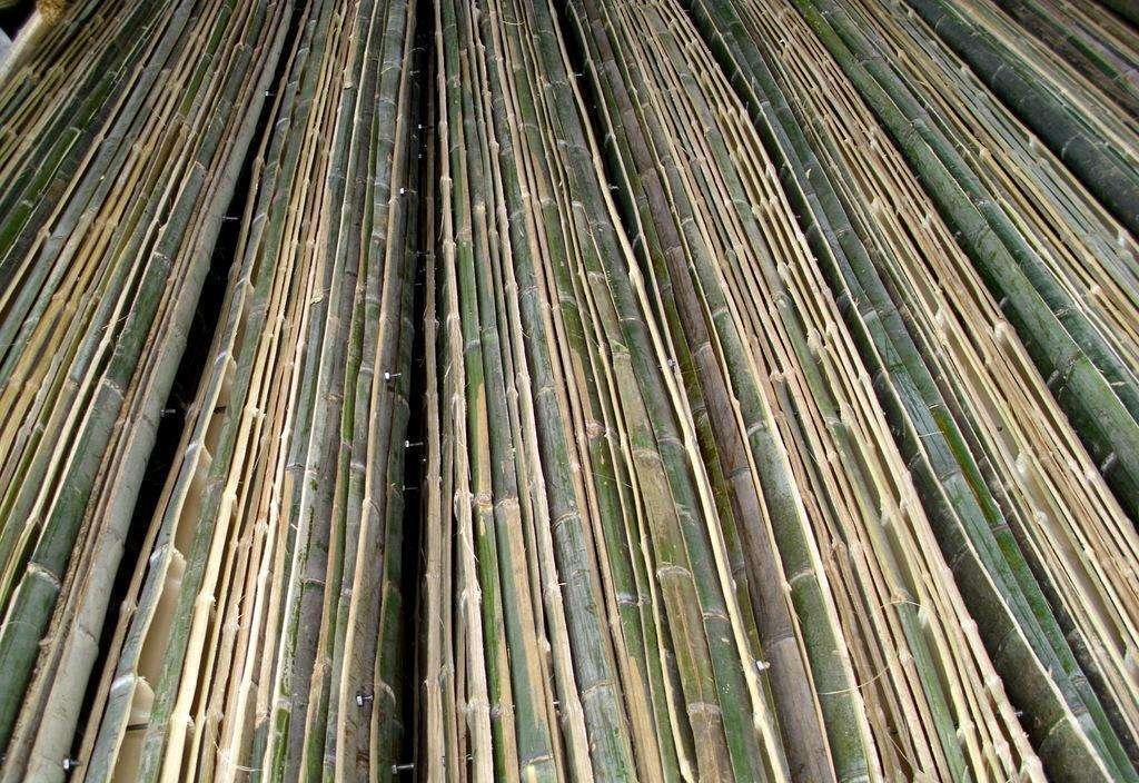 四川竹跳板厂家教你竹类栽植技术方法