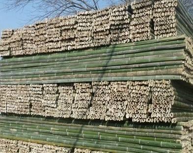 四川竹架板用竹子为原材料,我们要怎么种植毛竹?