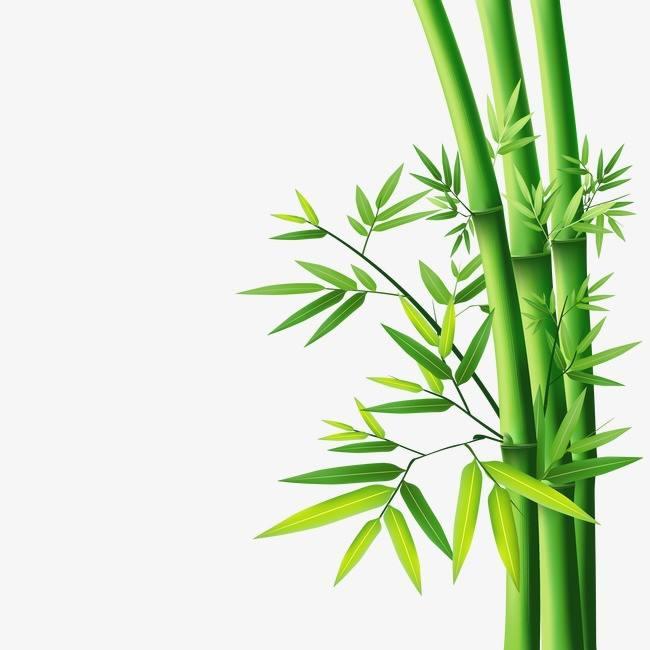 竹子的传统妙用知多少?四川竹片厂家告诉你