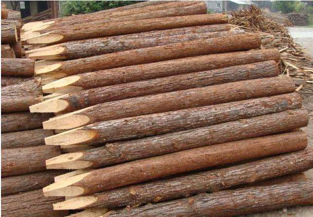 杉木种植技术要点