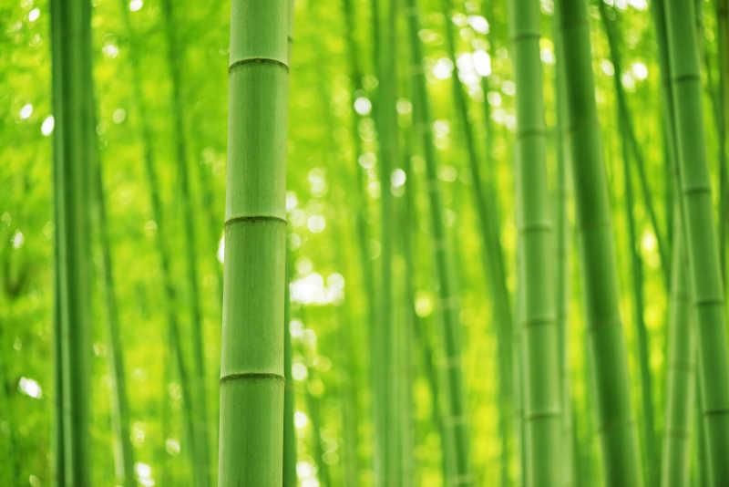 竹子的适用范围有哪些?四川竹片厂家告诉你