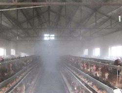 鸡舍降温消毒