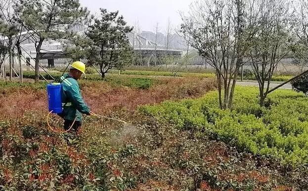 一年園林養護工作具體安排
