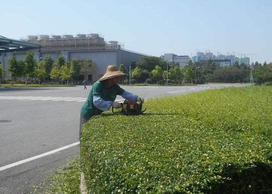綠化養護隊伍