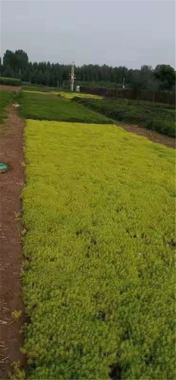 河南五色草造型