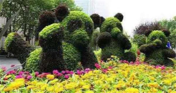 公园五色草绿色植物造型的特性有什么?