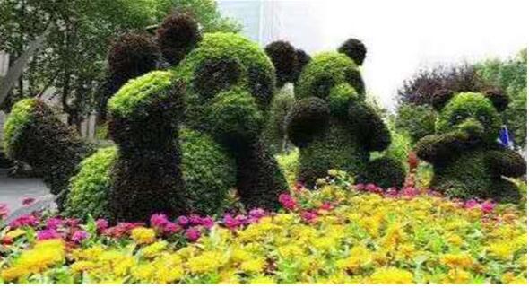 五色草造型的种植方法有哪些?如何延长使用寿命?