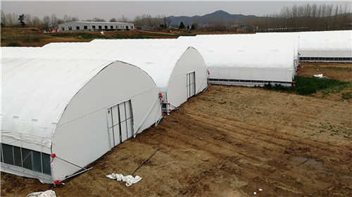 怎样应用河南薄膜大棚起到提高种植效益的作用呢