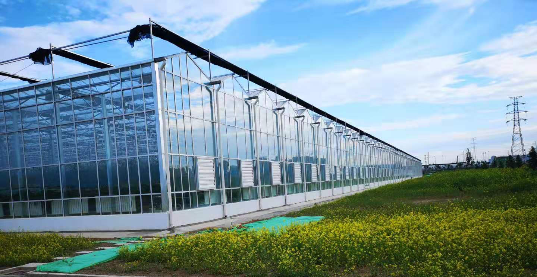 河南原阳微藻漫反射玻璃温室